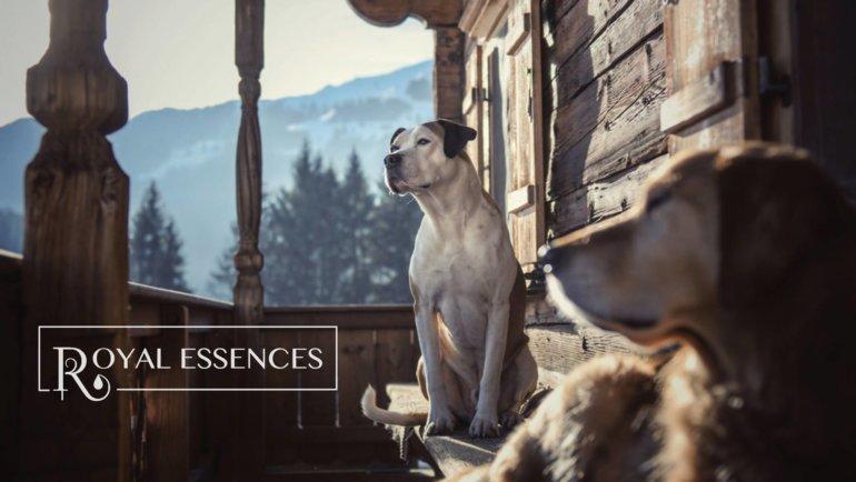 ROYAL ESSENCES MIĘDZYNARODOWYM SPONSOREM HDR